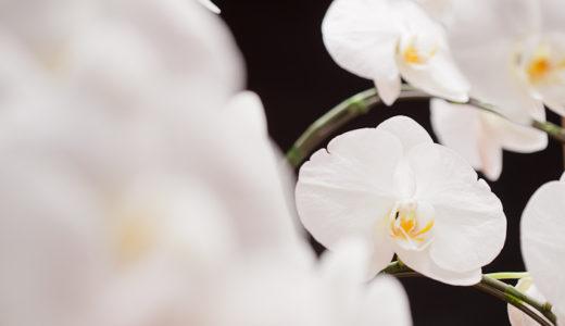 胡蝶蘭の回収サービスに関するお知らせ【2019年8月】